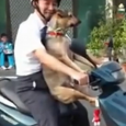 A compilation of the best funny dogs caught on the road from around the world. A dog sits on the roof of the car, dogs crossing the road, funny dog […]
