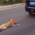 Video of a dog being dragged behind a moving car has caused outrage in China after being shared across the web.