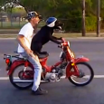 Dogs riding on the back of a motorcycle, scooter and bikes Compilation. Awesome biker dogs on motorcycle!
