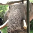 Elephant Attack at Yala National Park Sri Lanka. Gemunu the Elephant is already notorious for ambushing tourists in their cars as they drive through the Yala National Park, Sri Lanka. […]